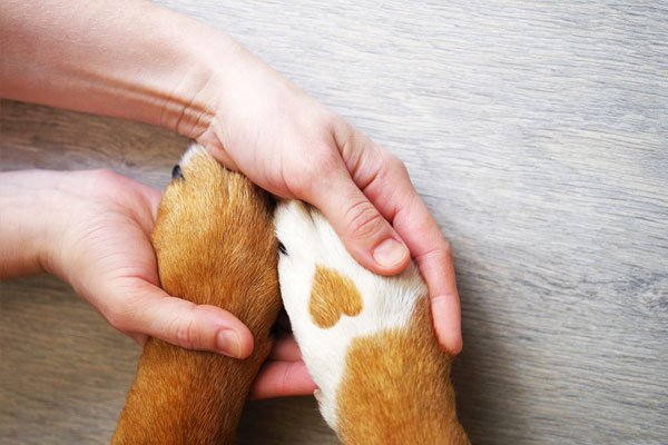 Dog paws with a spot in the form of heart and human hand close up