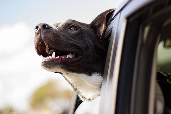 Happy Dog Head Dog Car Pet Happy Car Window