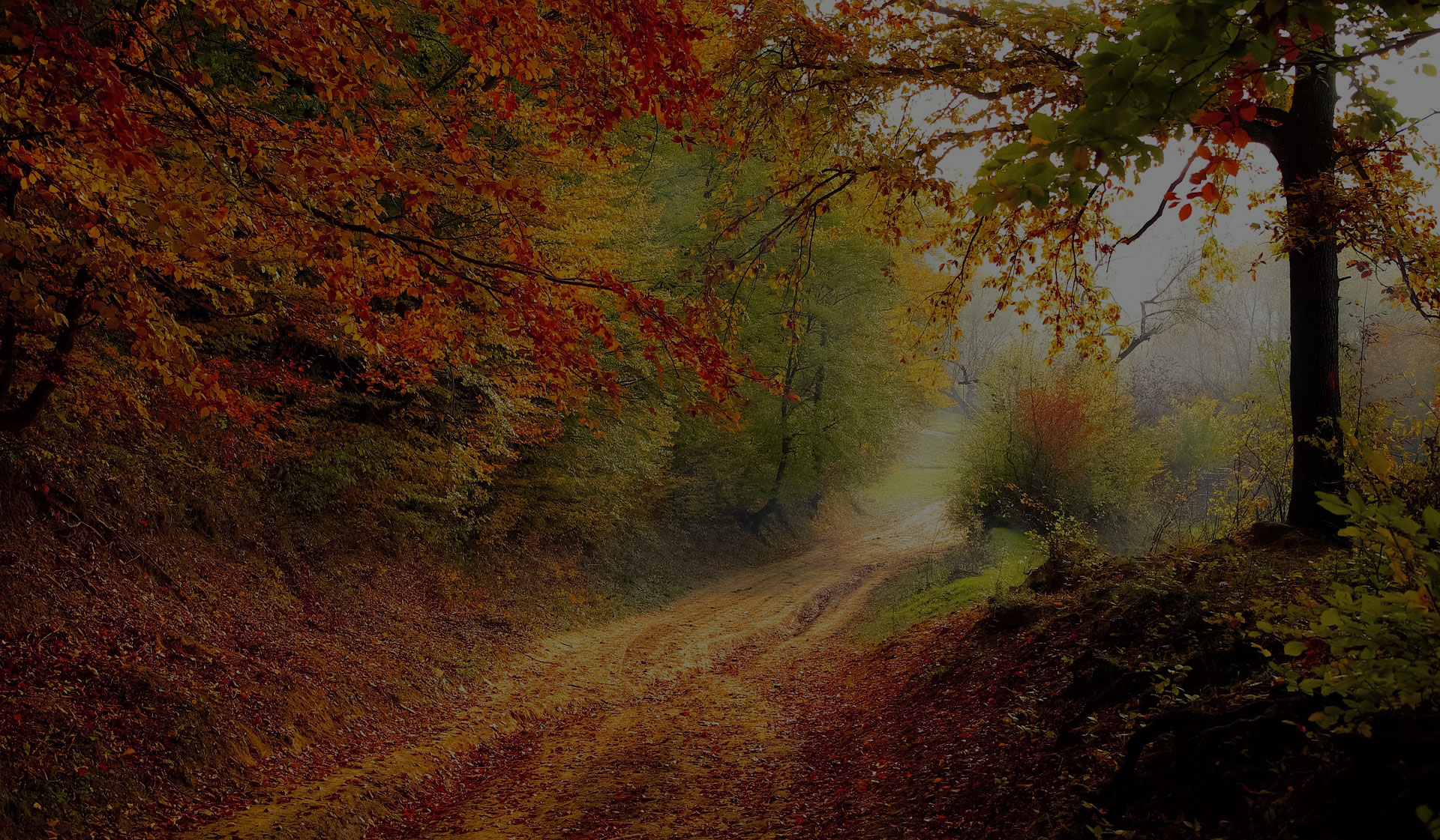 Forest Autumn Fall Season Nature Road Landscape