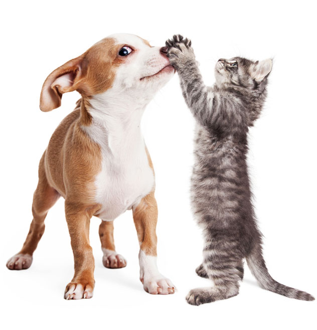 Funny photo of playful puppy with kitten batting at his nose - Image