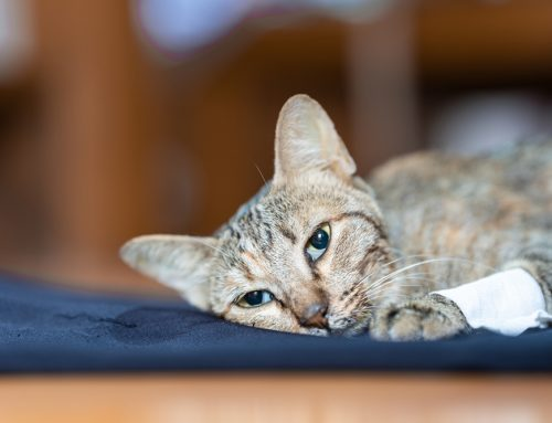 Veterinary Hospice Care—Ensuring Your Pet's Final Days Are Good