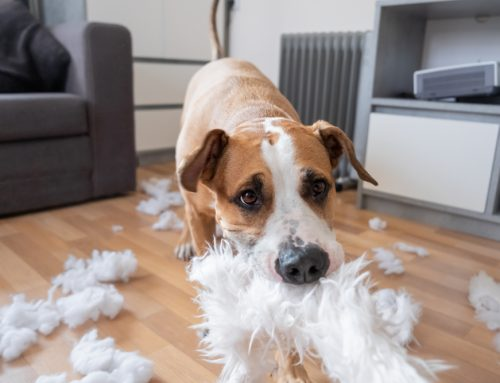 6 Tips to Entertain Your Bored Pet